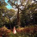Wandering Trees